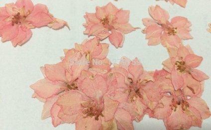 Персик розовый ларкспер